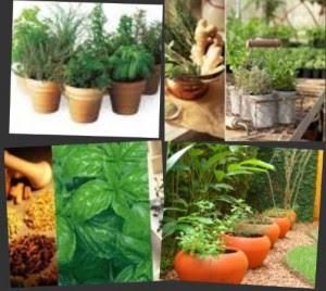 Propiedades y usos de las plantas