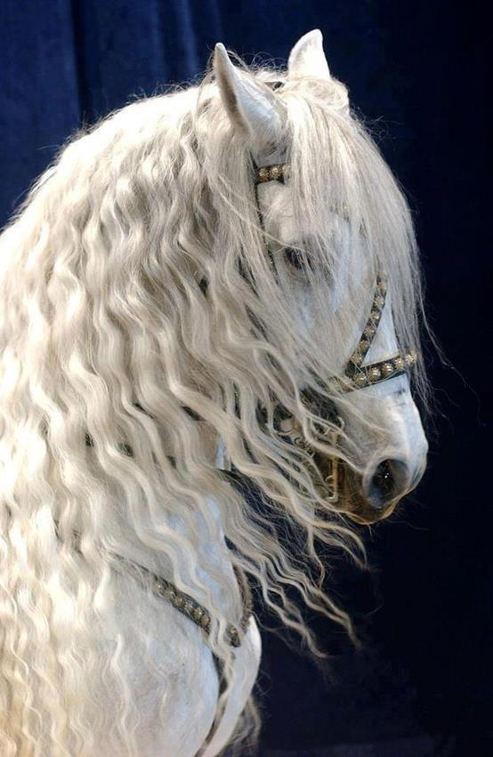 caballos - vol 5  17 fotos