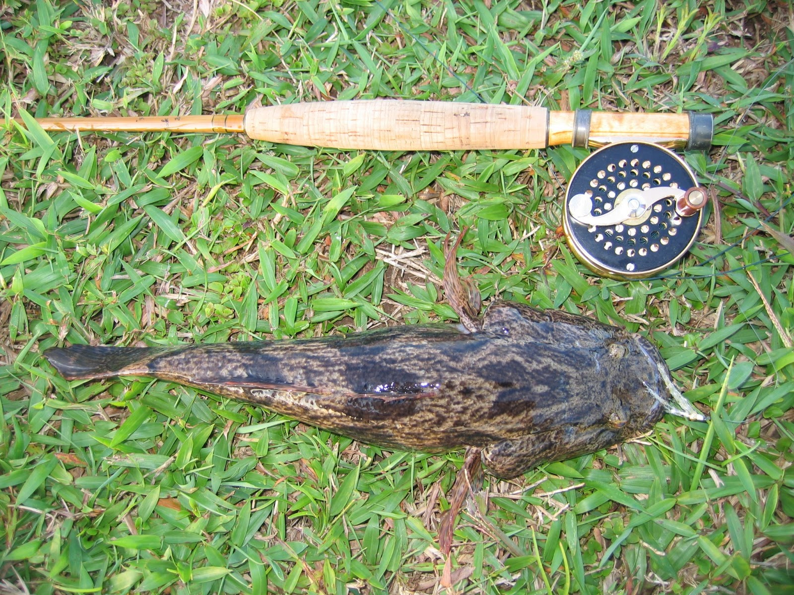 Fly fishing journal exotic species for Fly fishing journal
