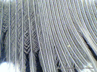 feather magnified