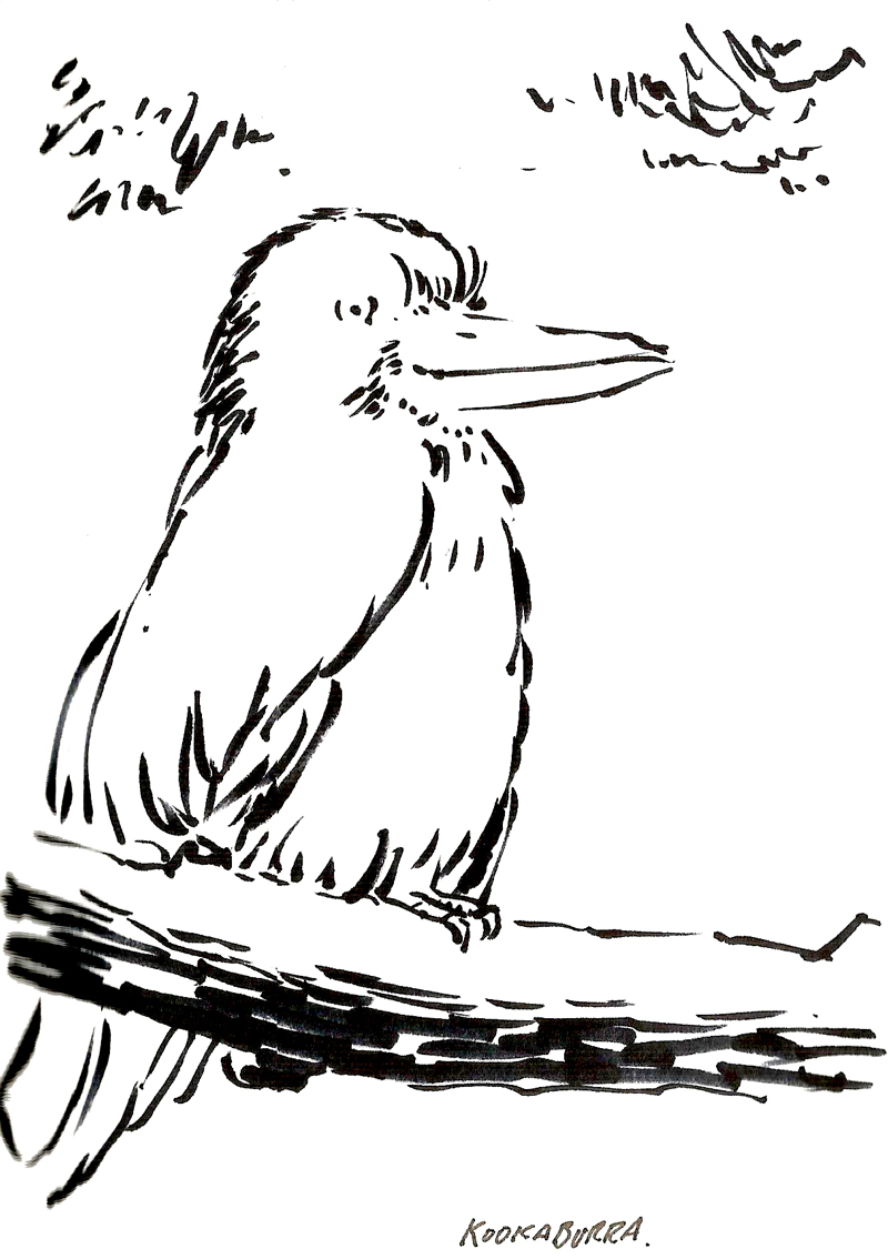Free coloring pages of a kookaburra for No david coloring page