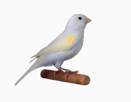 نغمة ميزة ورائعة بصوت طائر