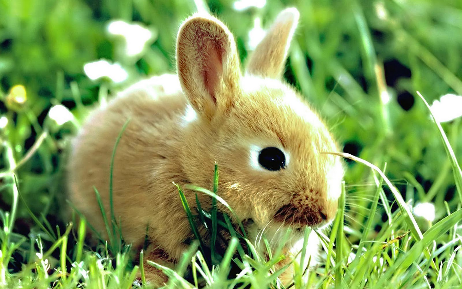 konijnen achtergronden hd wallpapers