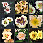 ERIKSON'S DAYLILY FARM