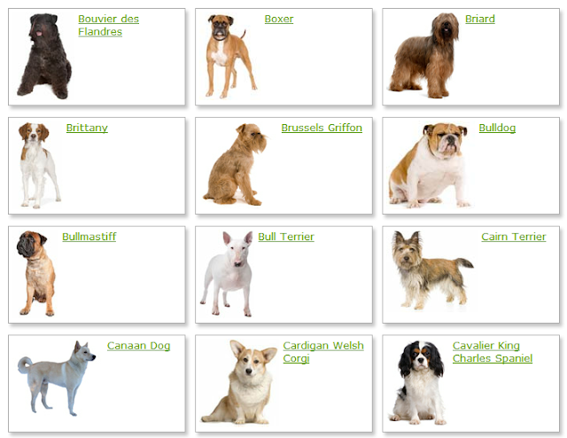 All List Of Different Dogs Breeds: Dog Breeds List With Picture
