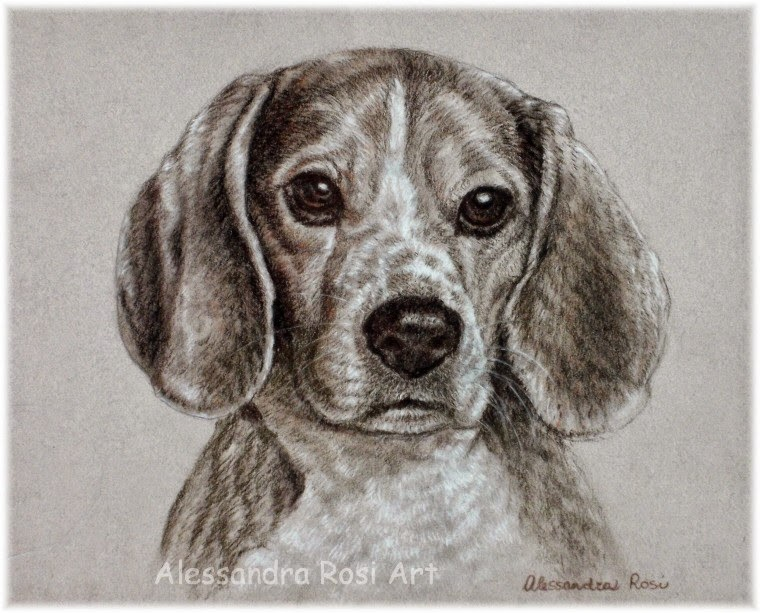 Custom Dog Portrait in Pencils