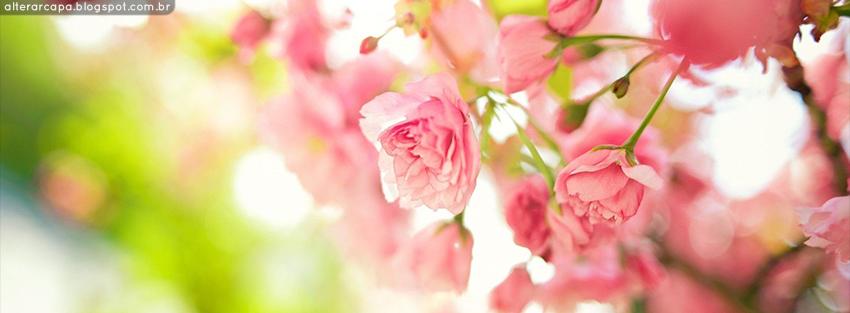 Alterar Capa: Flores cor de rosa