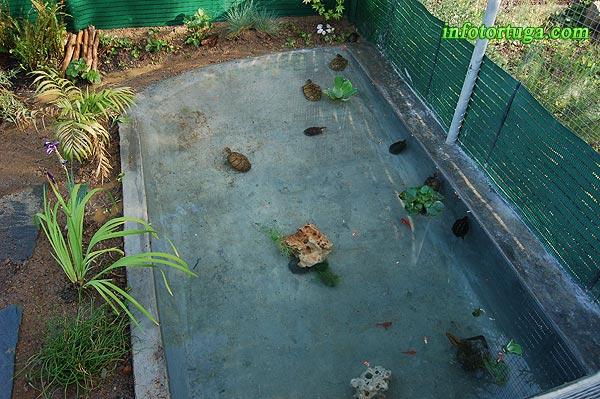 Estanques para tortugas tortugas hacinadas unas encima de for Filtro para estanque de tortugas