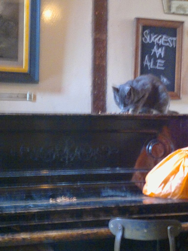 Cat eating from upright piano