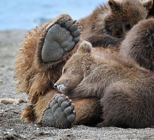 Urso no colo