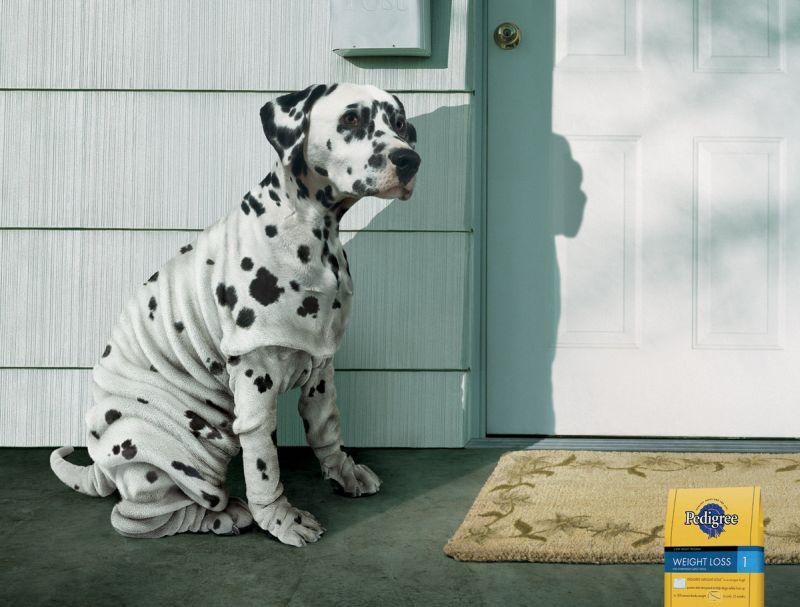 Increasing Dog S Insulin