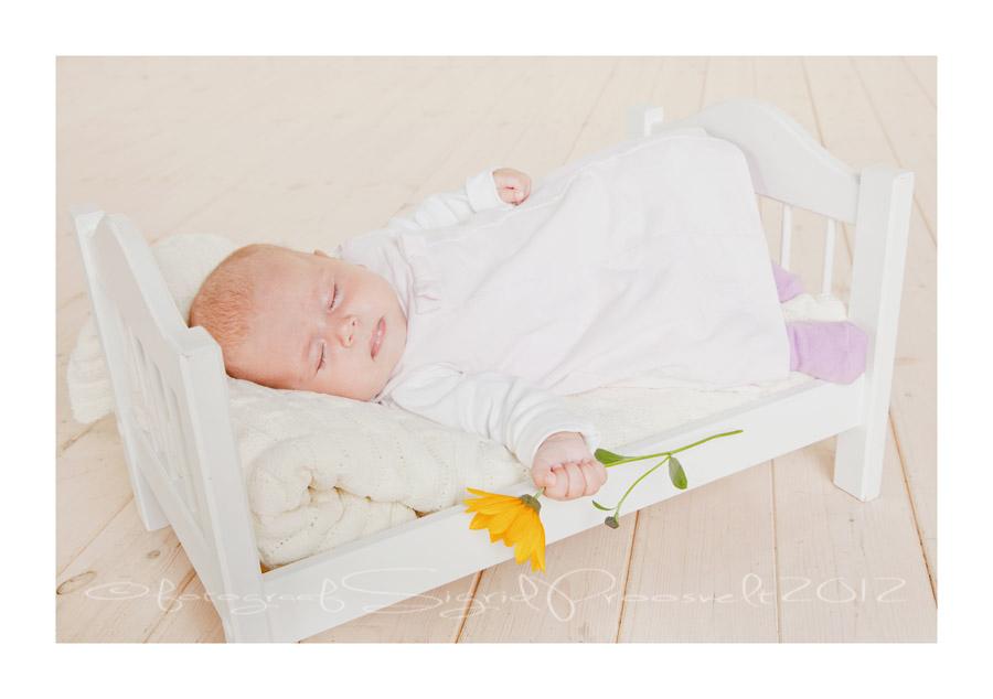 beebi-magab-fotostuudios-lill-käes