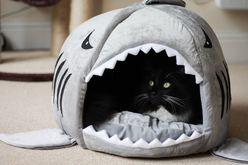 cookie his new shark bed cityscape bliss