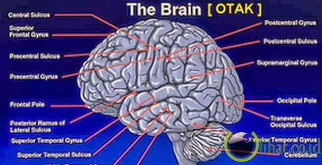 Otak manusia adalah Maha Komputer