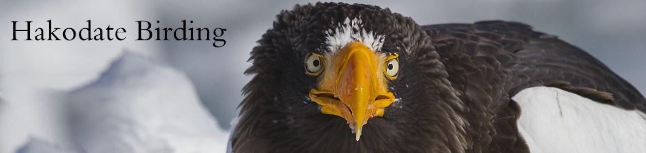 Hakodate Birding