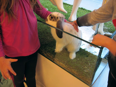Kids get hands on with the bunnies at Alexander Berardi's Boutique that is New in New York