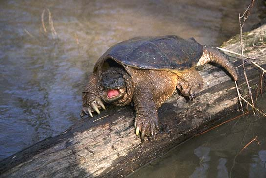 single men in turtle lake Ctv news - saskatoon - breaking news from saskatoon and surrounding areas.