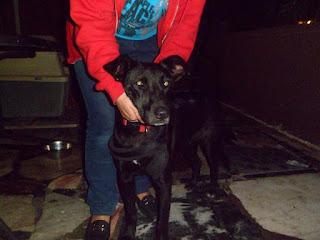 Βρέθηκε θηλυκό, μαύρο σκυλακι με λουράκι να περιφερεται μονο του στην παιδικη χαρα στην Ν Λεσβο στο Μαρουσι