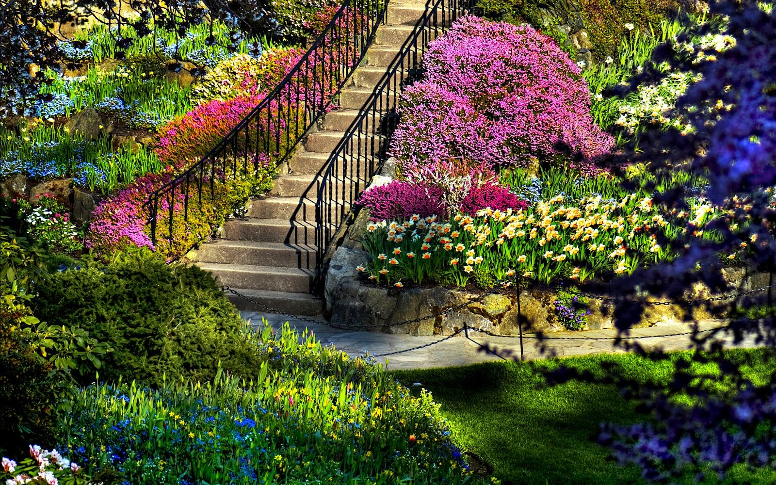 Most Beautiful Trees For Backyard : Paisagens de jardim  Papel de parede  Outubro de 2012  FOTOS DO