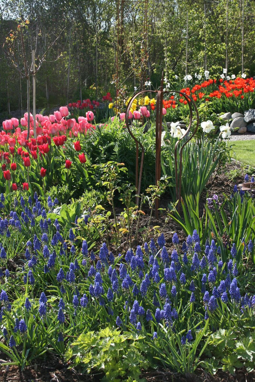 vårblomning trädgård