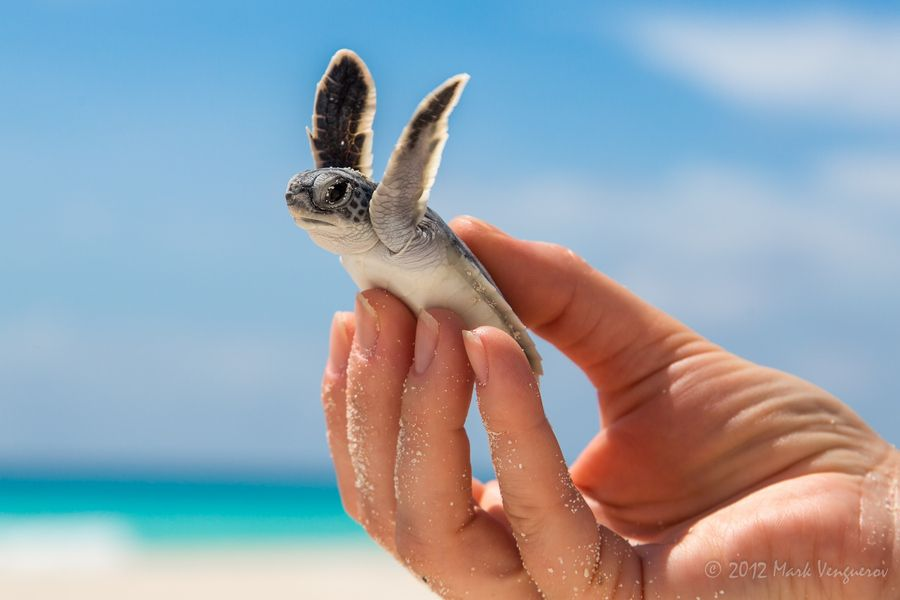 Cute baby ocean animals