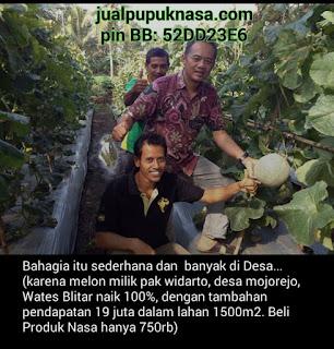 Kesaksian produk NASA pada tanaman Melon, pendapatan naik 19 juta