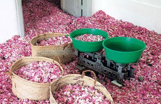 Make Rose Oil