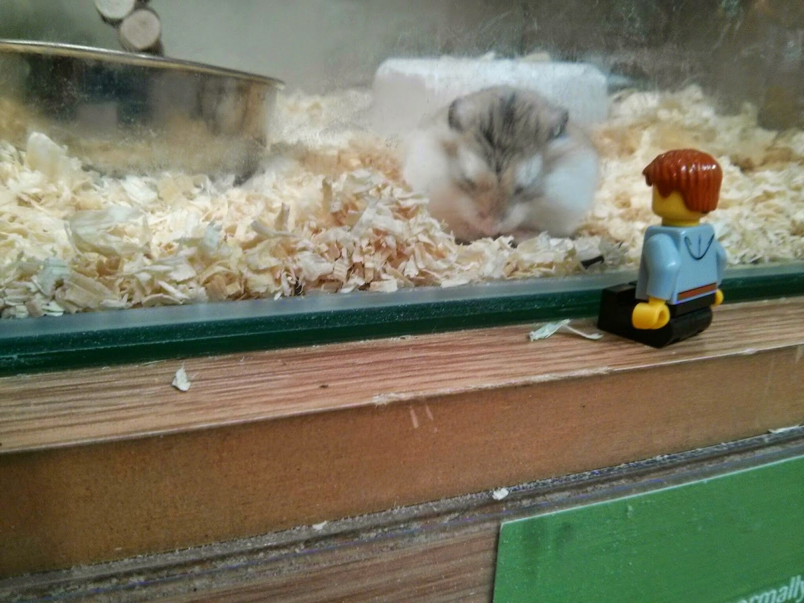 Hamster bowing to Kyle Emmett
