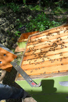 Open hive and tools