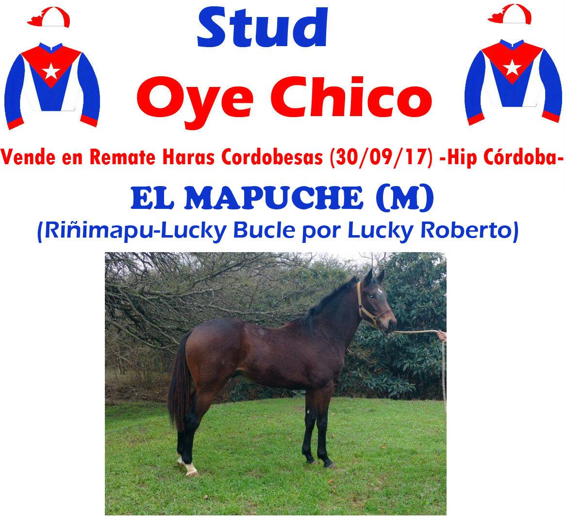 OYE CHICO EL MAPUCHE