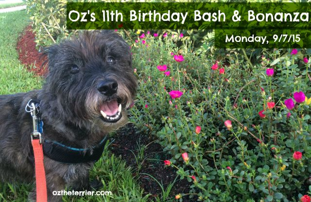 Oz announces his birthday celebrations; he will be 11 this year!