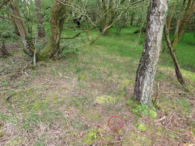 Cliburn Moss, Cumbria