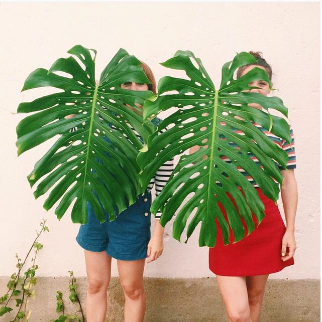 hojas de costilla de adán