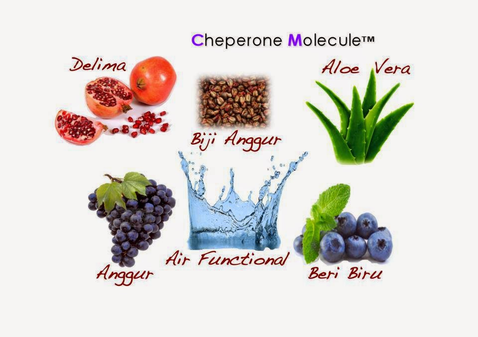 Exfuze Seven Plus Buah Blueberry dalam kandungan PLUS serta keajaibannya