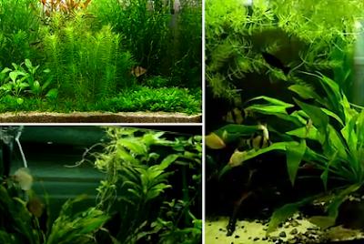 freshwater aquarium design concept