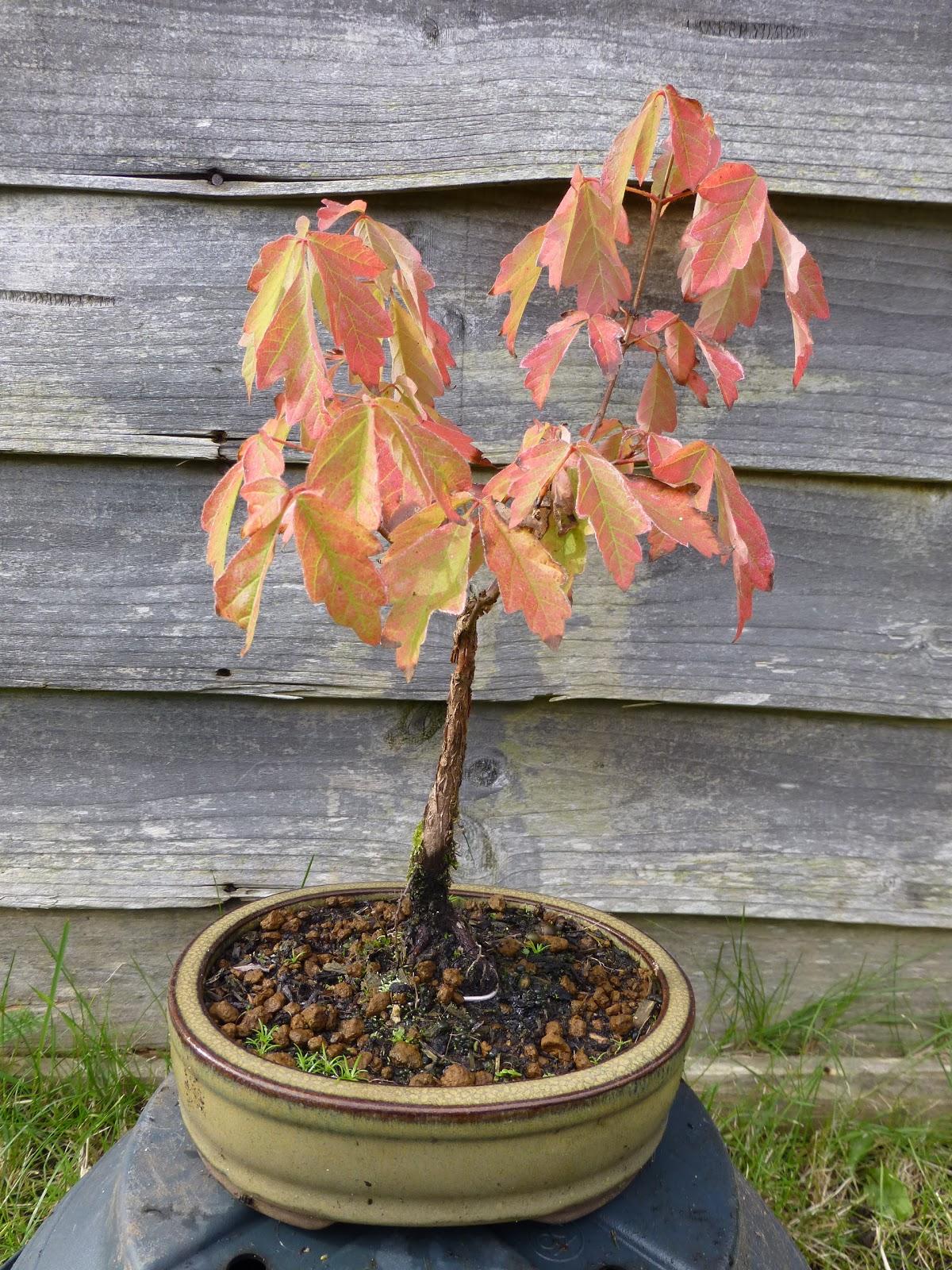Botaniquarium Blog Oktober 2012