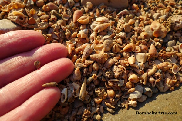 tiny sea shells by the sea shore Adriatic Sea Umag Croatia