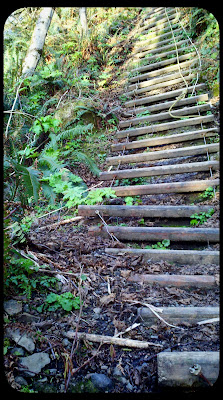south coast ladder