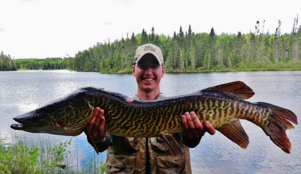 Eagle falls lodge rare catch tiger muskie for Tiger muskie fishing