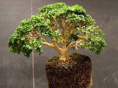 basic point of bonsai care