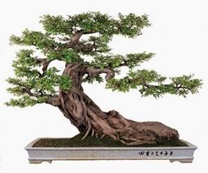 """<img src=""""bonsai14.jpg"""" alt=""""foto bonsai"""">"""