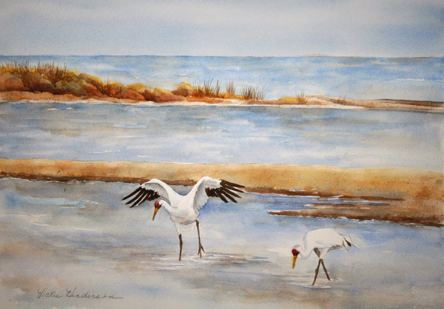 Whooping Cranes at Aransas National Wildlife Refuge, Texas