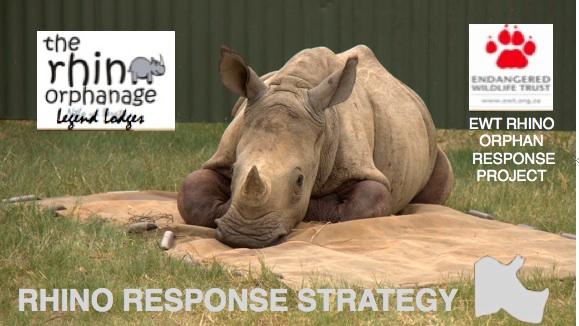 Rhino Response Strategy