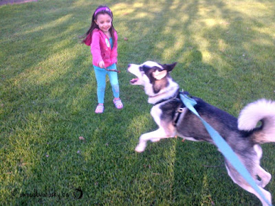 My little girl having fun with our Siberian husky