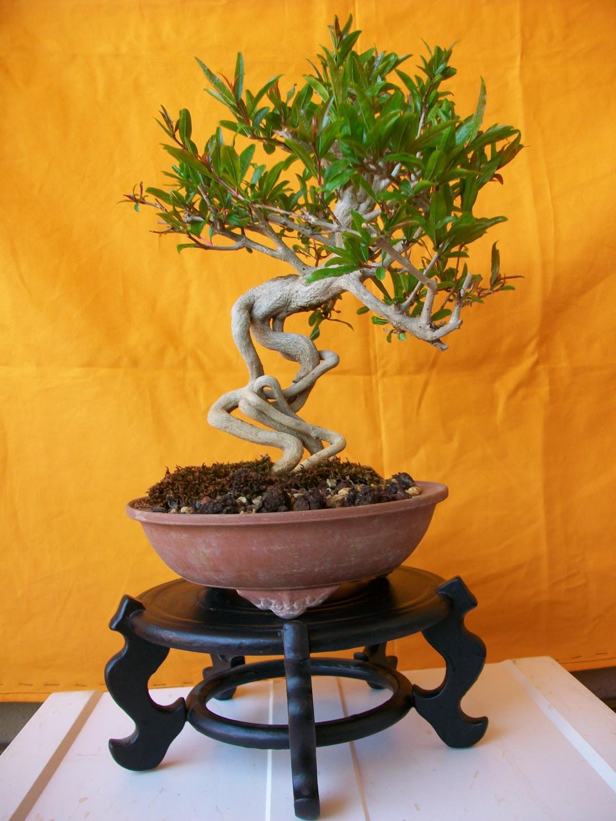 6 mesas y un granado el bons i y yo - Mesas para bonsai ...