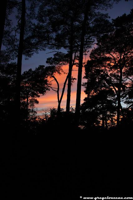 fin de soirée en forêt de Fontainebleau (C) Greg Clouzeau