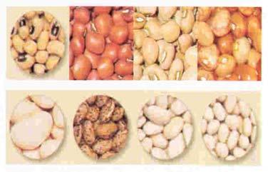 http://4.bp.blogspot.com/-o7TmnSBgyH0/TZSlNLSDI4I/AAAAAAAABGo/EsPh5TnkRao/s1600/kacang-kacangan.jpg
