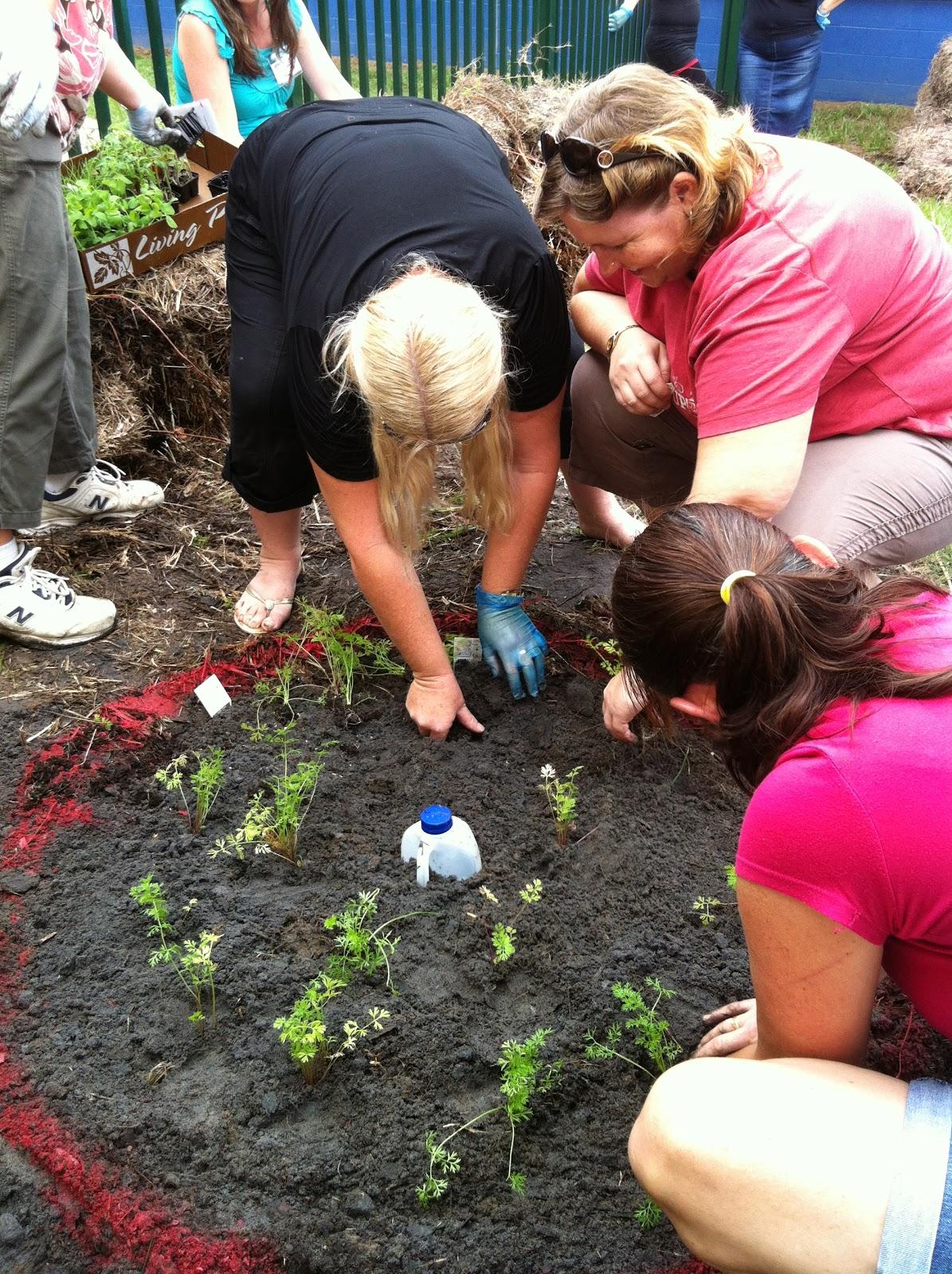 Stephanie Alexander Kitchen Garden Foundation Burpengary State Schools Green Garden