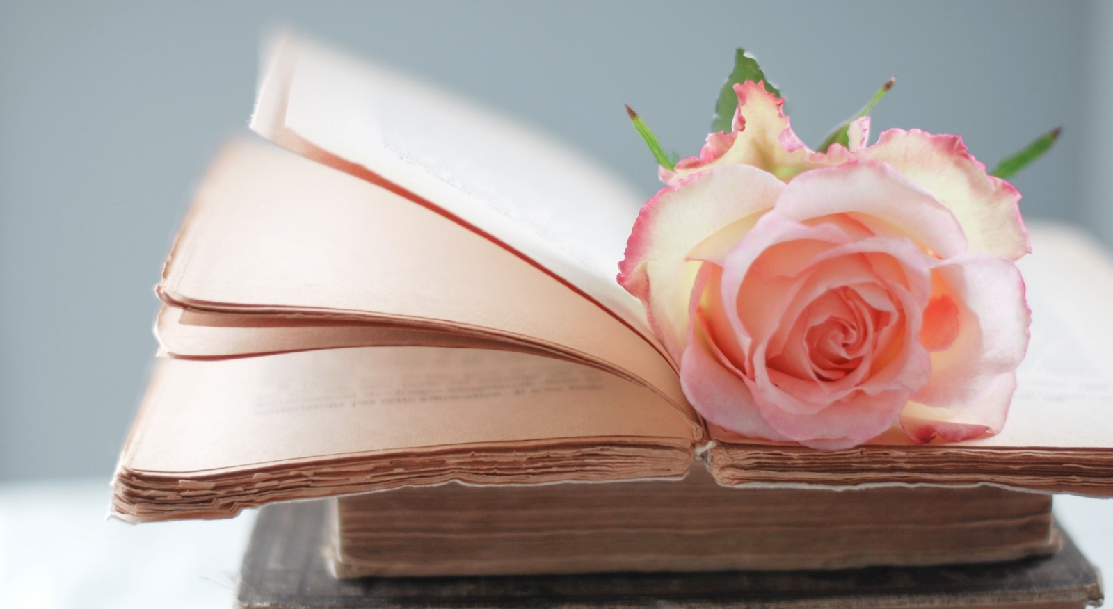 Book With Rose Wallpaper