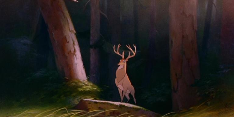 bambi rencontre féline